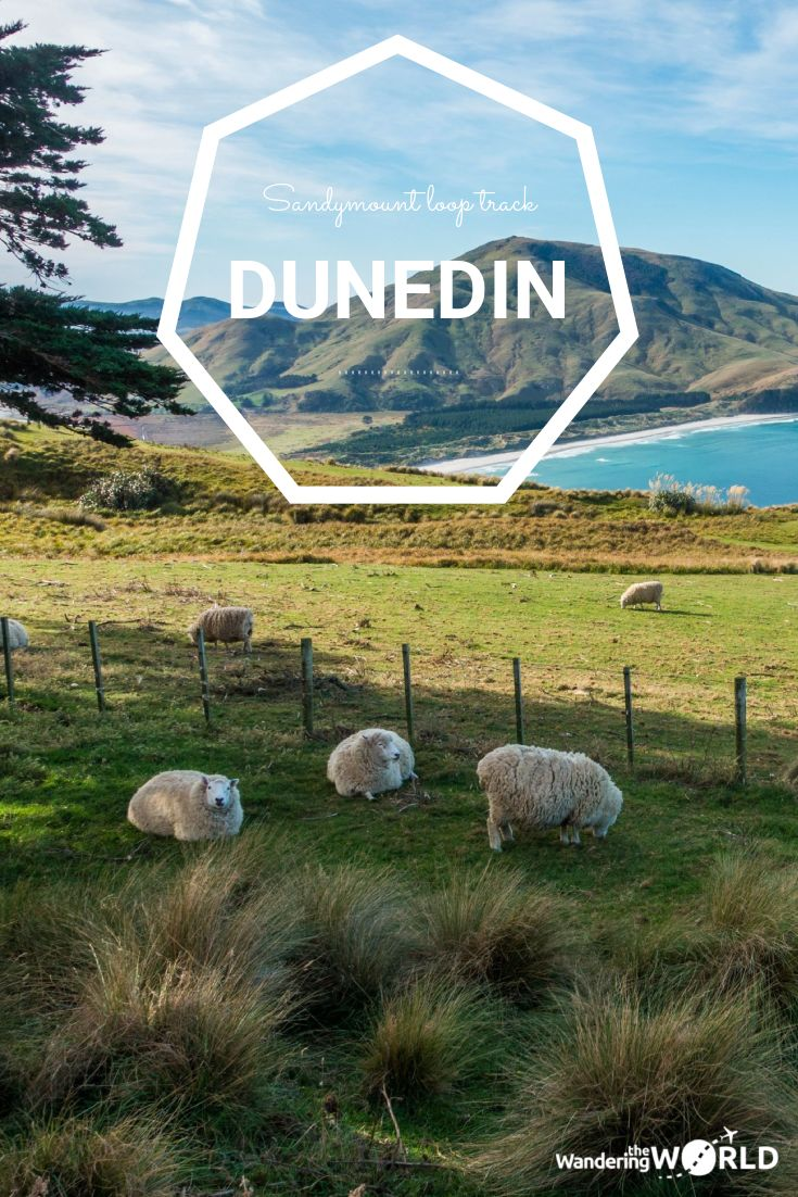 Hiking in Dunedin, New Zealand: the Sandymount Loop Track - Wandering the World