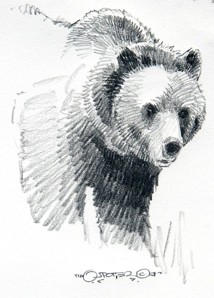 Multi genre project english inspiration grizzly bear - Dessin de grizzly ...