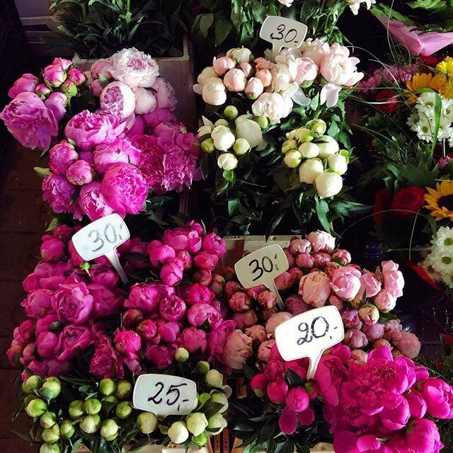 Juz Niedlugo Peonie Halamirowska Kwiaty Flowers Piwonie Kwiaciarnia Comingsoon2019 Homestagerka Kwia Christmas Wreaths Floral Wreath Holiday Decor
