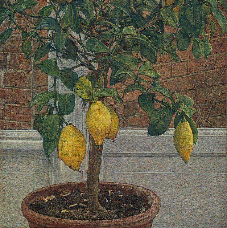 'Lemon Tree' by Antony Williams
