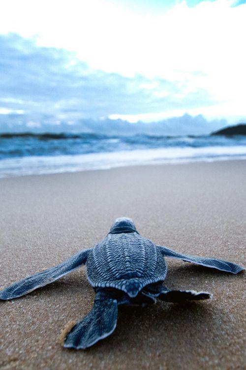 { Sea Turtle } x Antoine Baglan