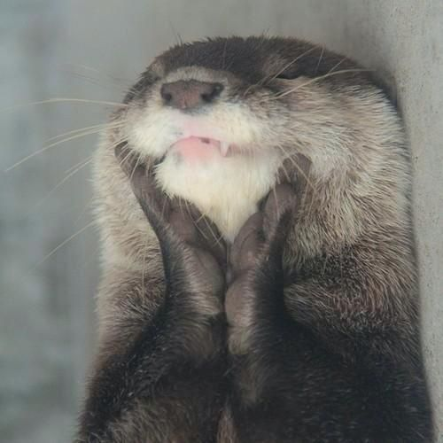 oh my god i love otters so much pic.twitter.com/K8rGBpCEvQ