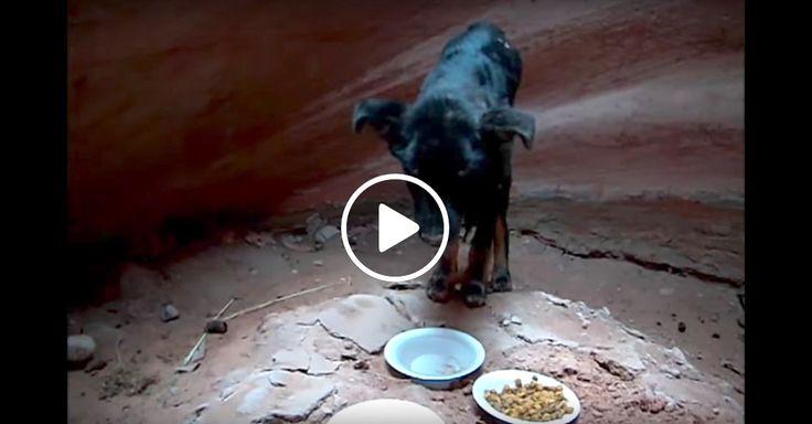 Úžasné video, úžasná záchranná psí akce