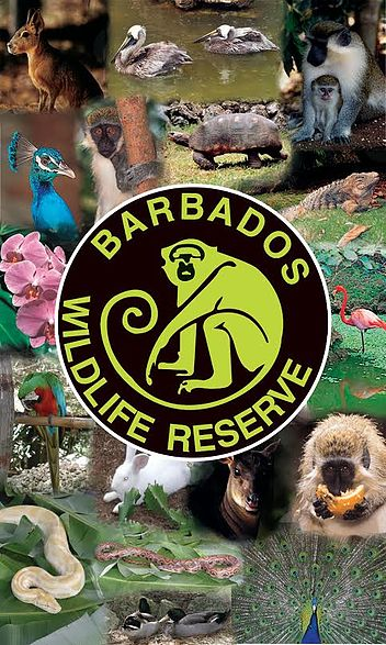 the Barbados Wildlife Reserve
