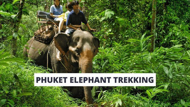 Phuket Elephant Trekking Tour (Video) Phuket Tours, #phukettour #phukettravelgo #phukettraveltours #phukettourism #phuketholiday #thailand #thailandtrip #phuketlife #phuketislands #phuketpatong #phukettravel  #thailandholidays #phukettours #phuket #phuketthailand #thingstodoinphuket #phuketisland #thailandphuket #phuketbeaches #thailandtourpackage #phiphiislandtour  #whattodoinphuket #phuketattractions #phuketthingstodo #phukettourism #phuketpackages #phukettrips
