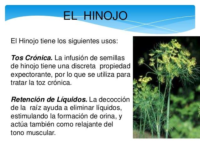 Hierbas medicinales con nombre y para que sirven buscar for Planta decorativa con propiedades medicinales