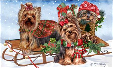 "Yorkshire Terrier Christmas Holiday Cards are 8 1/2"" x 5 1/2"" and come in packages of 12 cards. One design per package. All designs include envelopes, your personal message, and choice of greeting. Select the greeting of your choice from the drop-down menu above. Add your personal message to the Comments box during checkout."