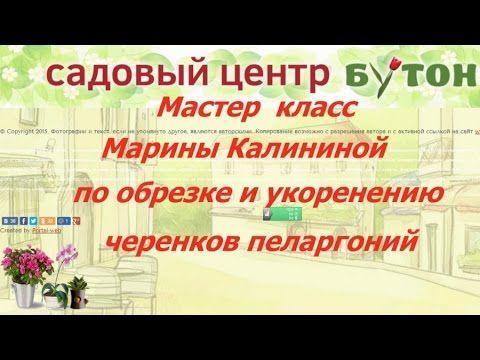 Мастер класс Марины Калининой по обрезке и укоренению пеларгоний
