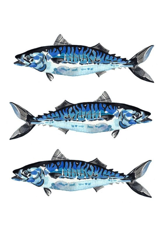 Atlantic Mackerel  This is an archival art print of my original Atlantic Mackerel painting.  The original illustration has been painted on