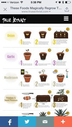 How to grow vegetables from vegetables