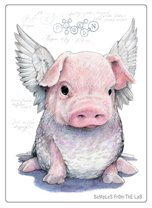 Rob Foote #art #illustration #coloredpencil #colour #pencil #prismacolor #fruit #animal #hybrid #piglet #angle #wings