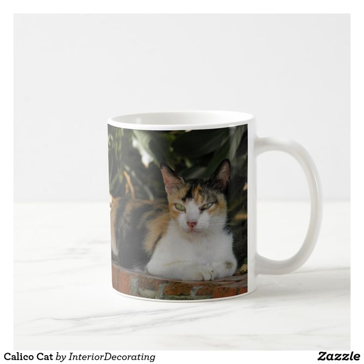 1000 Ideas About Calico Cats On Pinterest Cats Baby