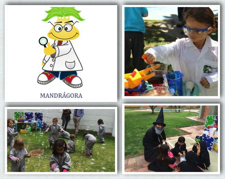 MANDRAGORA fiestas con ciencia 3162393885, 3112831041, 3208862791, 5212214 Bogotá Colombia mandragorafiestas@gmail.com