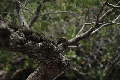 Komodo National Park   Natural Creations