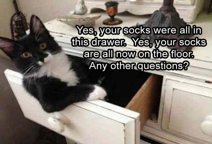 Funny Animal Picture Dump Of The Day 30 Pics