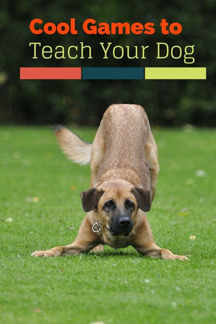 Enjoy a little bonding time during dog training with these five cool games you can teach your dog.