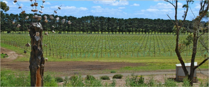 Oakdene Vineyards, Bellarine Peninsula, Australia