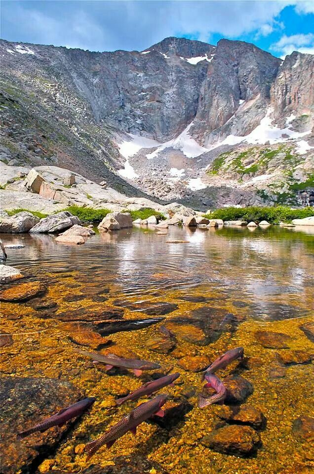 17 best images about alpine lake fishing colorado on for Fishing lakes in colorado