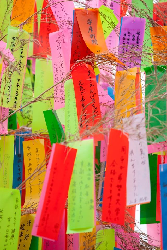 tanabata festival bamboo
