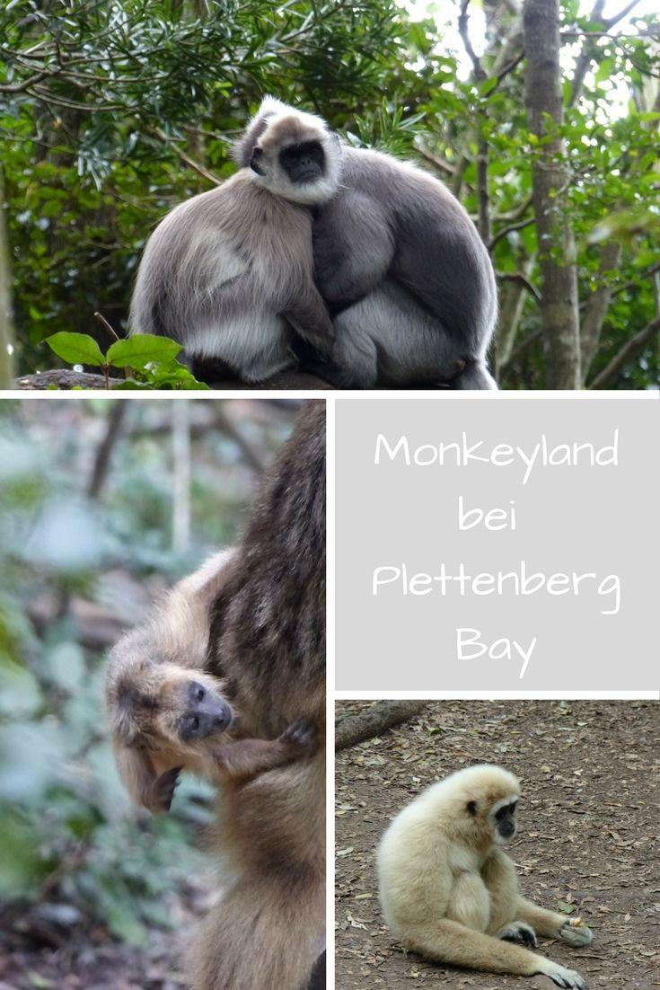 Einen Ausflug wert ist sicher das Monkeyland, ein Tierasyl, in dem elf Affenarten ein neues Zuhause gefunden. Zu Fuß entdeckt man den Wald mit einem Guide. Es gibt auch deutschsprachige Führungen. Ein schöner Ausflug für die ganze Familie.