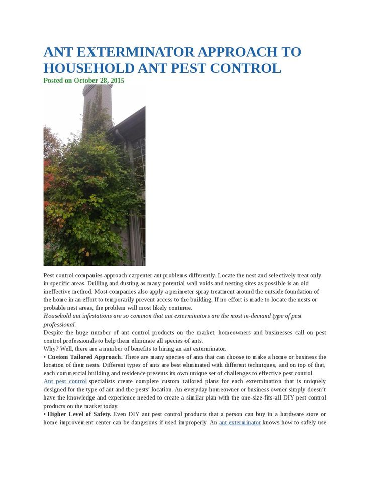 Ant exterminator approach to household ant pest control