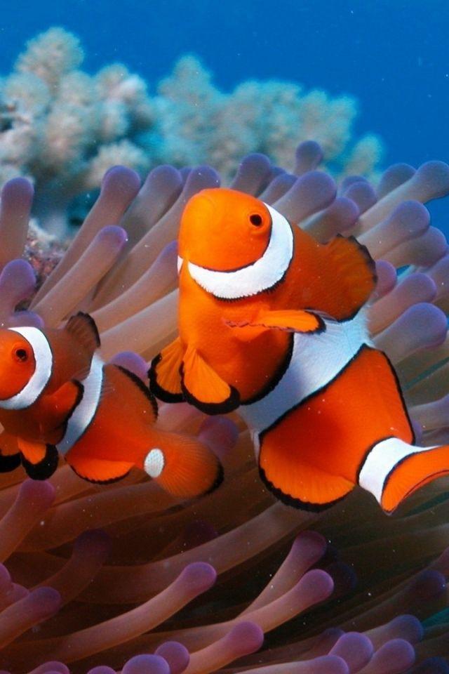 Download Wallpaper 640x960 sea, reef, coral, fish, sea ...