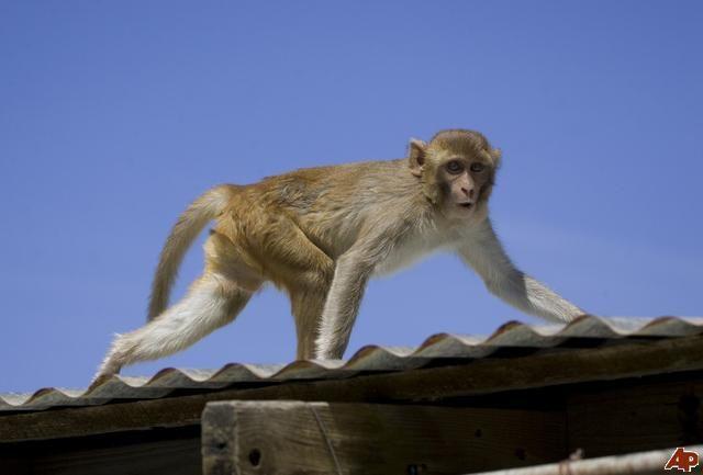 Los monos de La Isla de los Monos