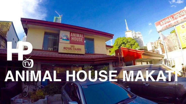 gopro philippines store | GoPro Animal House Veterinary Clinic Jupiter Street Makati Tour by HourPhilippines.com - WATCH VIDEO HERE -> http://pricephilippines.info/gopro-philippines-store-gopro-animal-house-veterinary-clinic-jupiter-street-makati-tour-by-hourphilippines-com/      Click Here for a Complete List of GoPro Price in the Philippines  *** gopro philippines store ***  GoPro Animal House Veterinary Clinic Jupiter Street Makati.  Animal House is the largest chain of v