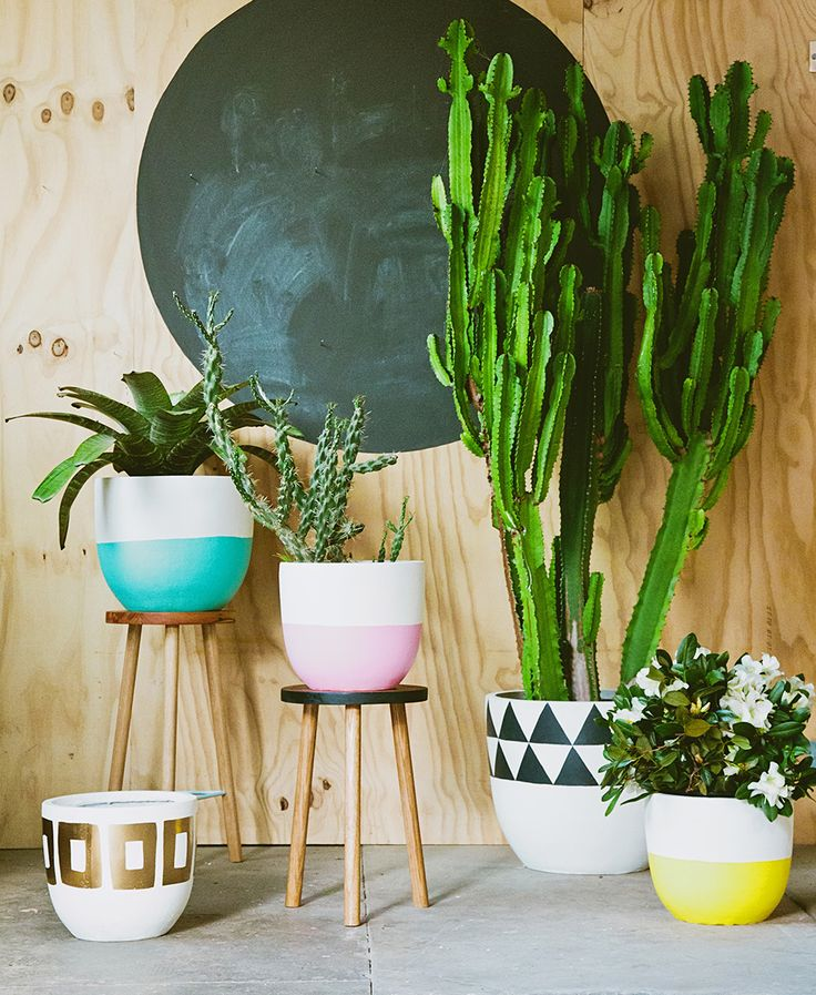 house plants in color block and geometric painted pots