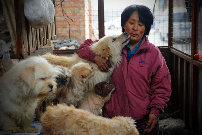 This Woman Pays $1,100 To Save 100 Dogs From Chinese Dog-Eating Festival in China