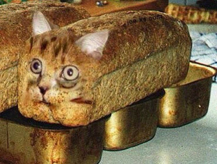 Cat In A Bread Box Amusing 21 Best Cat Breading Images On Pinterest  Breads Funny Cats And Decorating Inspiration