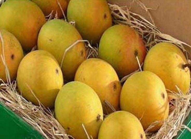 Mango Hd Wallpaper Free Download For Desktop Fruit Wallpaper Fruit Mango
