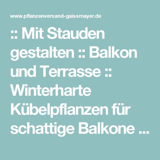 :: Mit Stauden gestalten :: Balkon und Terrasse :: Winterharte Kübelpflanzen für schattige Balkone - Pflanzenversand Gaissmayer