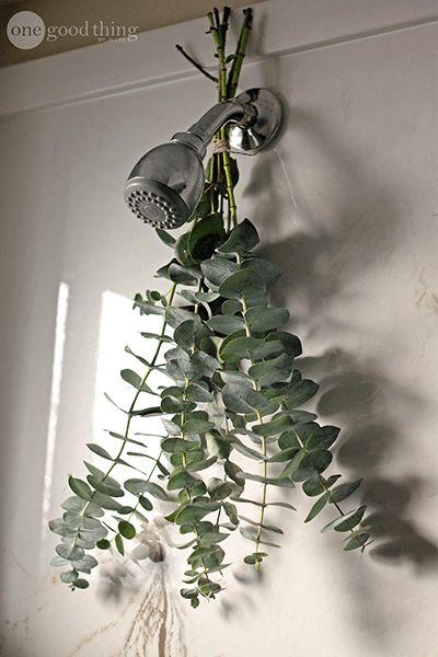 Aromatic Eucalyptus Shower.