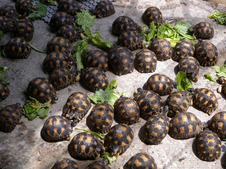 Tortoises Gallery, Images, Pics, Photos, Pictures, Photography