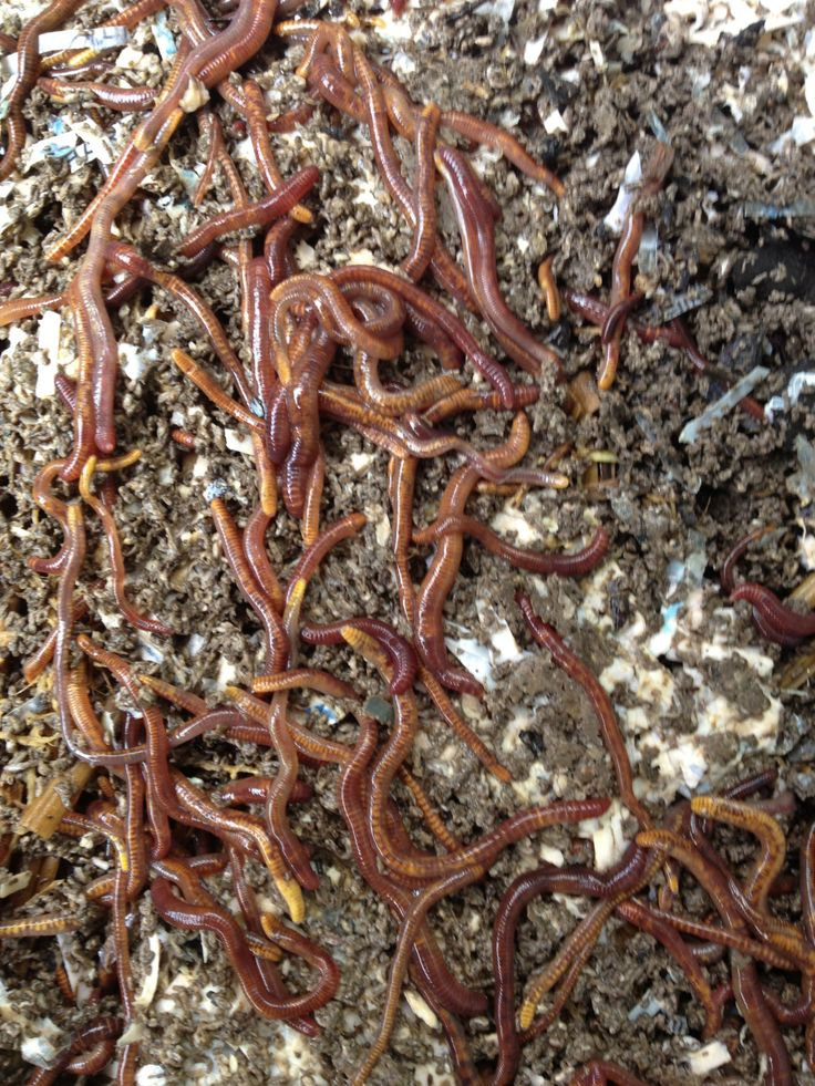 Happy Composting Worms