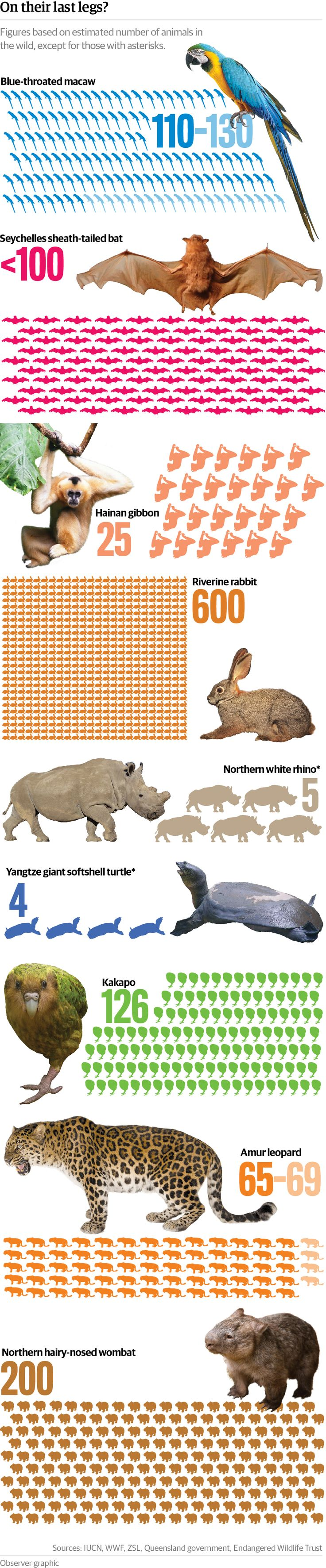 Last legs: the species with only a few remaining individuals - graphic The rate of animal extinction has rocketed in the past half-century, as hundreds - possibly thousands - of species disappear each year. Our graphic indicates some of the species whose numbers have dwindled to a vulnerable few.