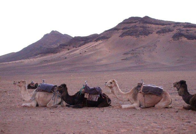 Roadtrip in the High Atlas Mountains #gotripit #mountains #morocco #sahara #Medina #roadtrip #travel