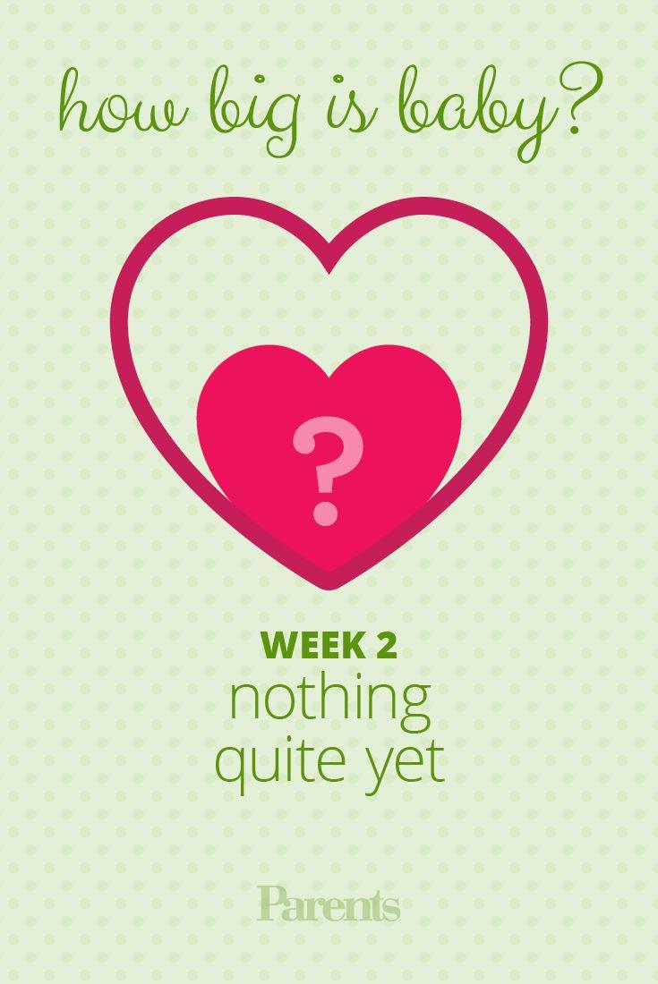 Due date calculation of pregnancy week by week
