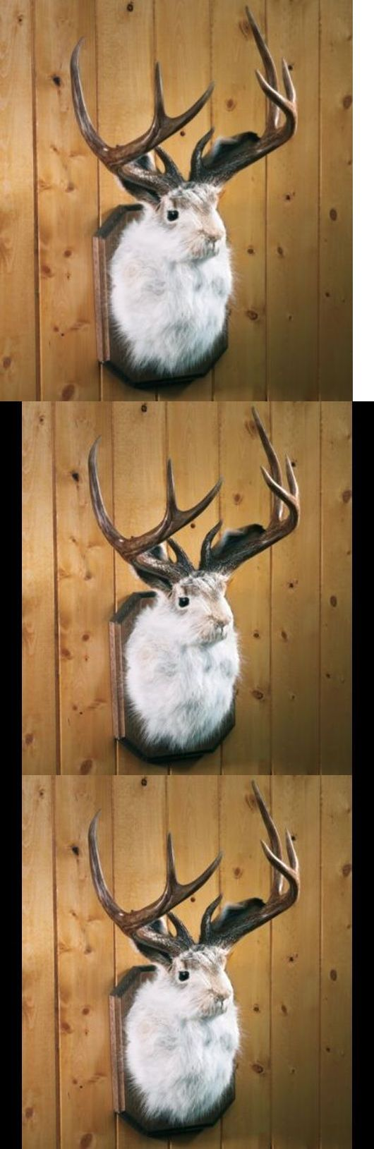 Large Animals 177908: Mounted Jackalope Buck Home Decor Cabin Hunters Conversation Piece Unique New!!! BUY IT NOW ONLY: $253.81