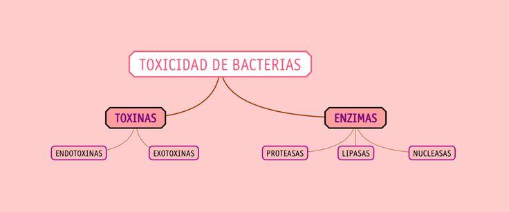 56 best mapas de conceptos y otros grficos biologa bach y toxicidad de microorganismos fandeluxe Images