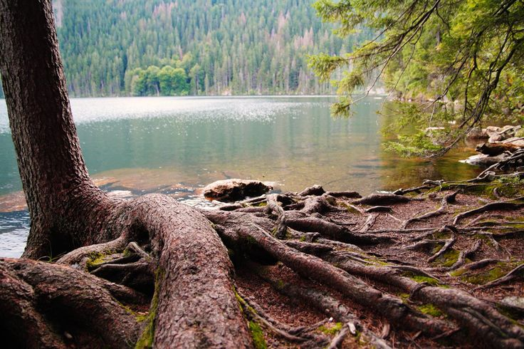 Černé jezero (literally, Black Lake) in the Bohemian Forest is the largest and deepest natural lake in the Czech Republic.