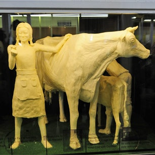 The Iowa butter cow.