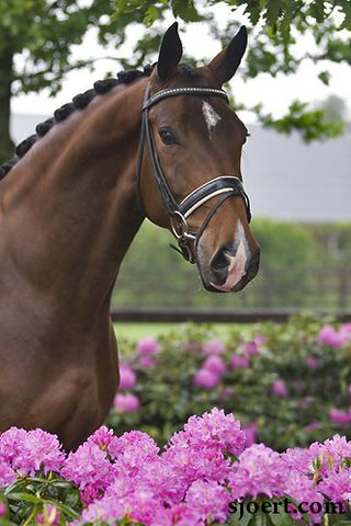Uusminka, full sister to the famous dressage stallion, Moorlands Totilas. She's gonna be great.