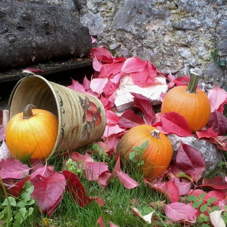 #Countrylife #Countryside #Halloween #organge #pumpkin #Autumn #autumnal #autunno #red
