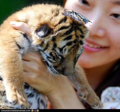 What a Lovely Hat!: Hats, Cat, Adorable Animals, Baby Animals, Photo, Baby Tigers