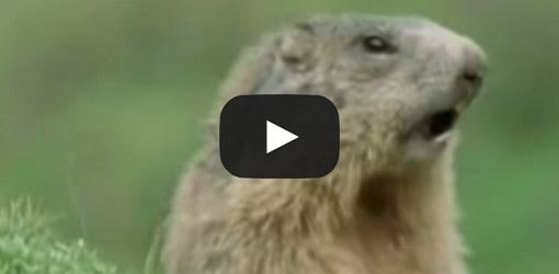Hysterisk morsomme dyr