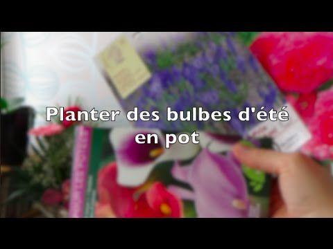 Planter des bulbes d'été en pot pour le balcon   Arum, Begonia, Triteleia - YouTube