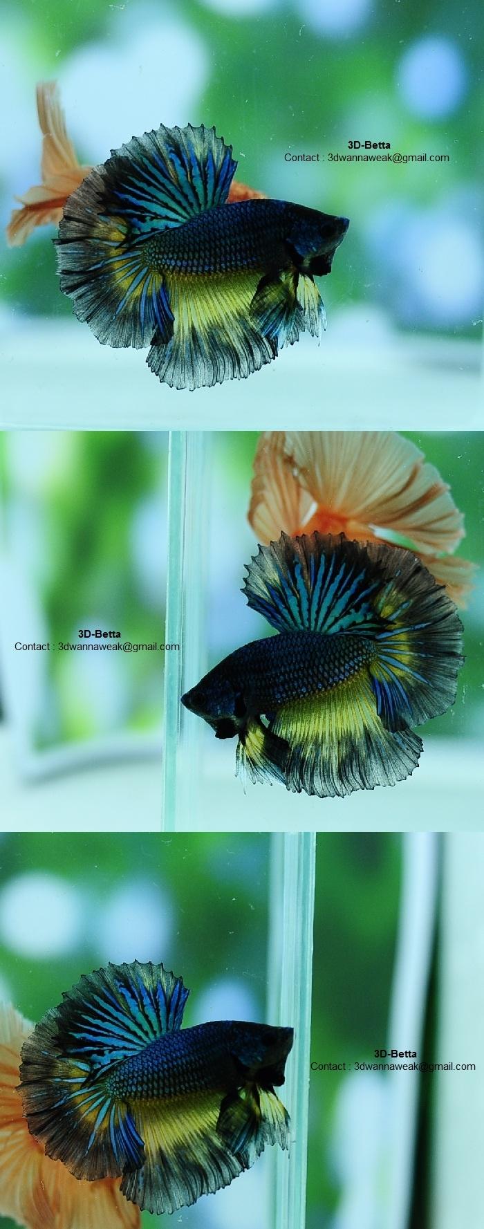 64 best Betta Fish images on Pinterest | Fish tanks, Beautiful fish ...