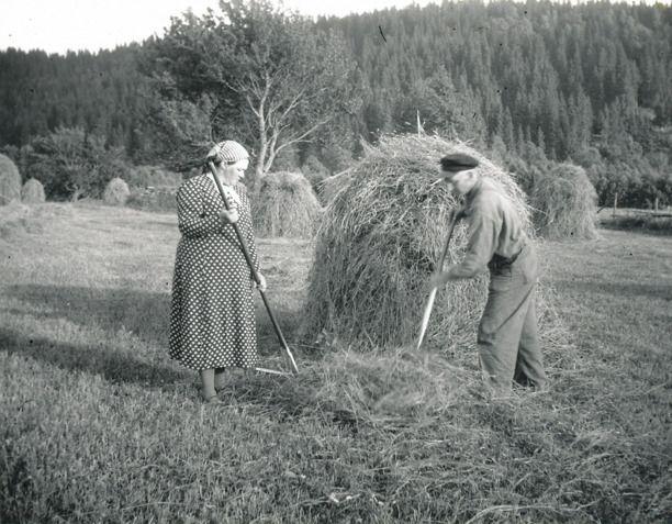 Höstakning på den slänta marken vid Björkedalen, Ljungstorp med makarna Lann tidigt 1930-tal. A. 43 Björkedalen * - Soldattorp, Skaraborgs Reg Nr 315 | Ljungstorps skiften